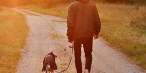 sprehod-moski-pes