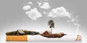 Zeliščna cigareta – trojanski konj tobačne industrije