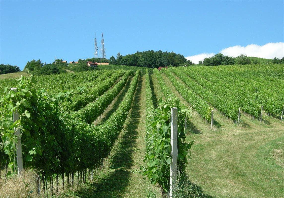 Pokrajina pri Sremiču. Vir slike: www.geago.si