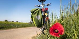 kolesarjenje v naravi